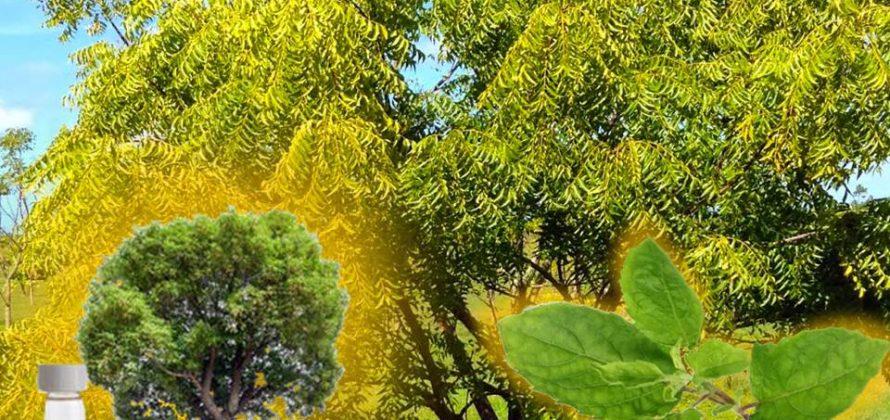 Mágikus növények