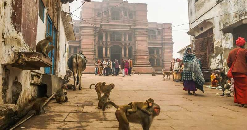 Govinda dev TemplomVrindávanban