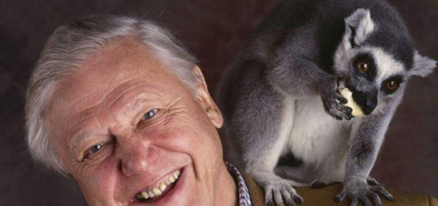 David Attenborough 2020-as kijelentése vegetariánus jövőt jósol