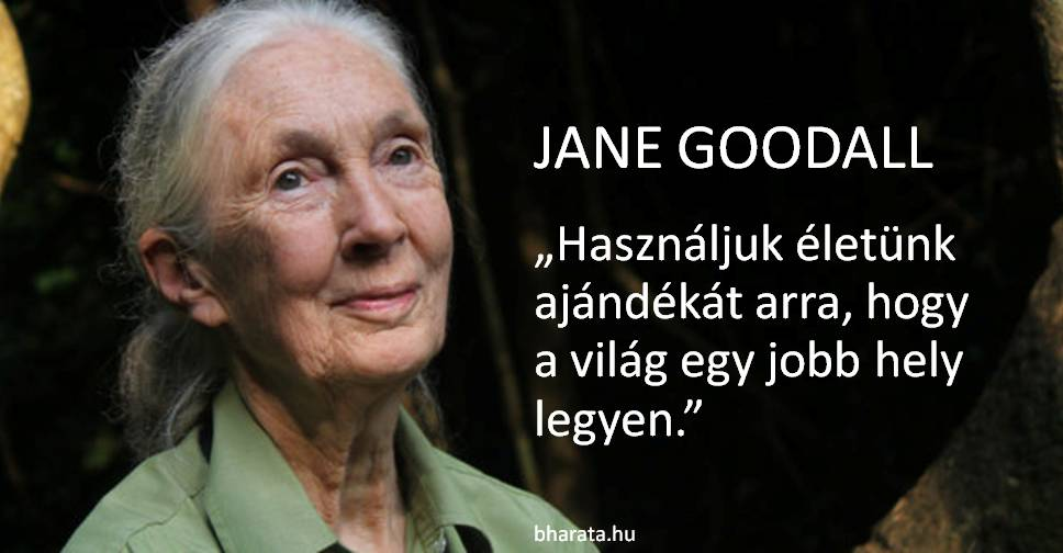 Jane Goodall idézet