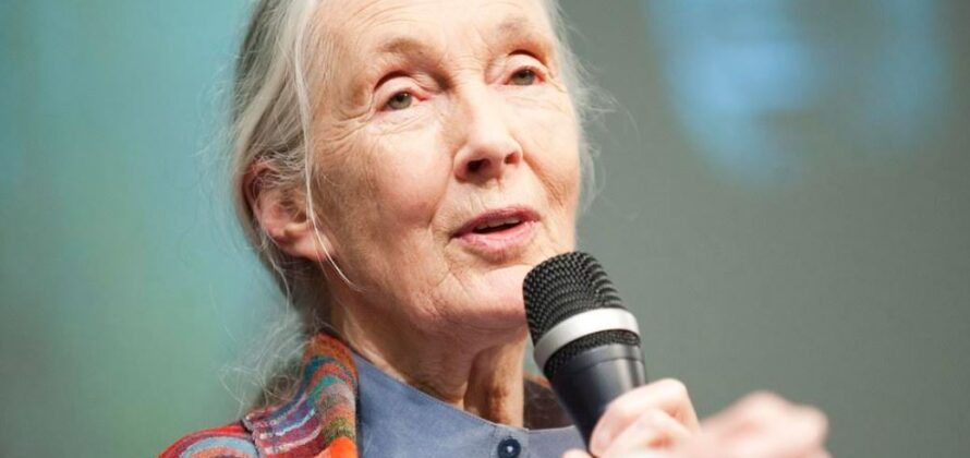 Jane Goodall vegetáriánus